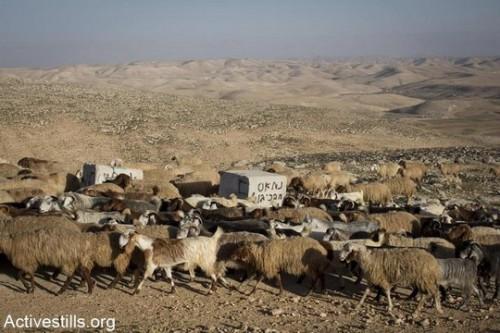 מדוע מסרבת ישראל להכיר באורח חיים מסורתי של האוכלוסיה הפלסטינית?