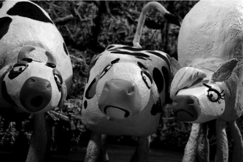 18 הפרות שהפכו לאויבות ישראל מגיעות לפסטיבל סרטי הנכבה