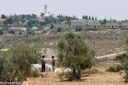 פלסטינים מהכפר קריות עומדים בשדה למול התנחלות שילה שחלקה בנויה על אדמותיהם במהלך, הגדה המערבית, 6 יוני, 2015. אחמד אל-באז / אקטיבסטילס
